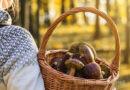 Pilzsaison: Wann welche Pilze sammeln?
