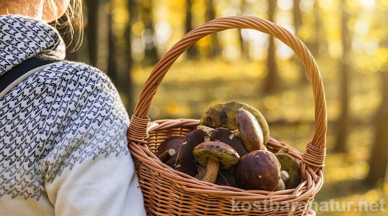 Pilze sammeln ist etwas, das du das ganze Jahr hinweg genießen kannst. Wann die gängigsten heimischen Pilze Saison haben, kannst du hier nachlesen.