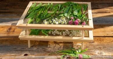 Kräutertrockner selber bauen: einfaches Gestell zum Dörren von Pilzen, Beeren und Kräutern